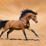 Galloping horse - zen mind
